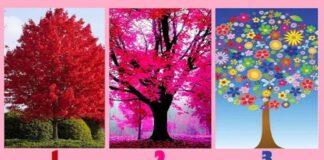 Pasirinkite medį ir sužinokite, kaip labai nuoširdus esate