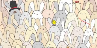 Testas: tarp zuikių yra paslėptas velykinis kiaušinis. Ar galite jį rasti?