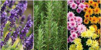 11 augalų, kurie gali apsaugoti jus nuo uodų, erkių, musių ir tarakonų