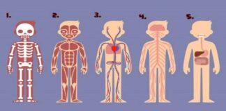 Kuri kūno dalis yra svarbiausia norint išgyventi? Atsakymas atskleis, ką jums reikia pakeisti gyvenime