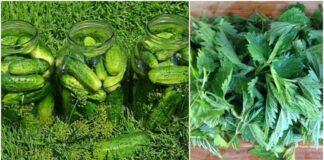 5 efektyvūs ir paprasti būdai padidinti agurkų derlių