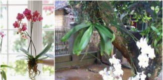 8 faktai apie orchidėjas, kurių tikriausiai nežinojote