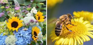20 augalų, kuriuos labai mėgsta bitės