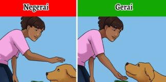 Patarimai, kaip susidraugauti su nepažįstamu šunimi