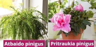 Kurie augalai pasižymi neigiama energija ir mažina pinigų srautus?