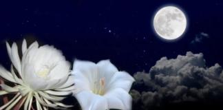 11 gėlių, kurios žydi tik naktį. Jos nuostabiai kvepia ir puikiai tinka sodui!