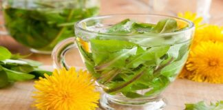 Kiaulpienių arbatos, kurią lengvai pasiruošite namuose, nauda sveikatai ir grožiui