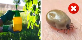Natūralus būdas, kaip apsaugoti savo sodą nuo erkių