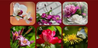 Testas: pasirinkta gėlė atskleis jūsų charakterį