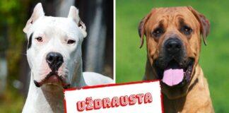Ar žinojote, kad kai kuriose pasaulio vietose yra uždraustos šios šunų veislės?