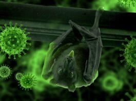 šikšnosparnis koronavirusas covid