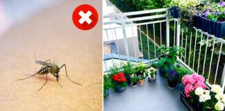 Laikykite šiuos augalus balkone ir uodai paliks jus ramybėje!