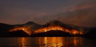 miškas gaisras