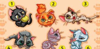 Testas: pasirinkite kačiuką, kuris panašiausias į jus!