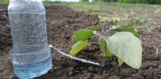 Augalų laistymas iš butelio. Patogus sprendimas, kai esate išvykę