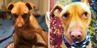 Pora norėjo priglausti šunį, bet prieglaudos darbuotojas įspėjo, kad jų išsirinktas augintinis - neįprastas