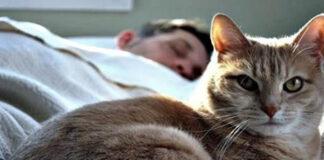Kodėl katės miega ant žmogaus: ką reiškia jų poza ir pasirinkta vieta?