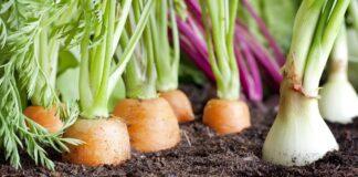 Astrologas atskleidė, kaip užsiauginti gausų derlių