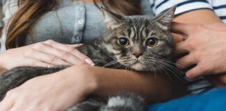 Ženklai, kad jūsų katė gali būti siejama su magija