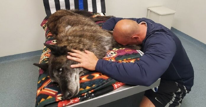 Pareigūnas visiems laikams atsisveikina su policijos šunimi - savo partneriu ir draugu