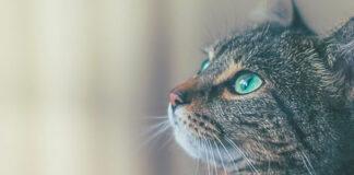 Slapta kačių galia: kaip jos jaučia ligas ir bando apie tai įspėti