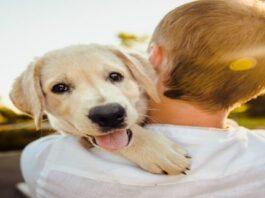 Kaip šunys apsaugo nuo bėdų ir atneša sėkmę: faktai ir ženklai