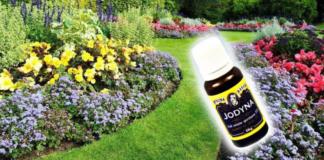 5 būdai, kaip panaudoti jodą sode. Jums niekada nebereikės jaudintis dėl savo augalų!