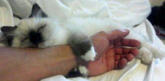 Faktai, kodėl katė turėtų būti kiekvienuose namuose