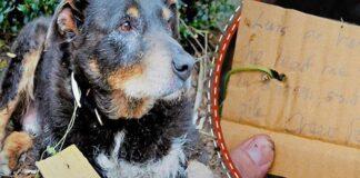 Patys didžiausi herojai gyvena šalia mūsų: šio šuns istorija tai įrodo