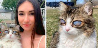 Katinas staiga neteko regėjimo. Sužinokite, kodėl taip nutinka ir rūpinkitės savo augintiniais