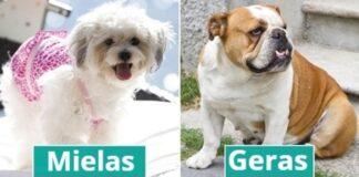10 geriausių šunų veislių, kurias galite auginti namuose