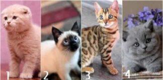 Pasirinkite kačiuką ir sužinokite, kuo traukiate vyrus