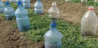 Plastikiniai buteliai sode. Kaip juos panaudoti dar kartą?