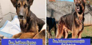 Pora priglaudė sunkiai sergantį šunį. Apgaubtas meile ir rūpesčiu gyvūnas atsistojo ant kojų