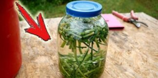 Sode be chemikalų: kaip paruošti natūralų insekticidą ir fungicidą?