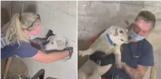 Ugniagesiai išgelbėjo dingusį šunį, kuris iš tikrųjų penkias dienas buvo įstrigęs betoninėse sienose