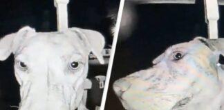 Dingęs šuo sugrįžo 3 val. ryto ir paskambino į duris