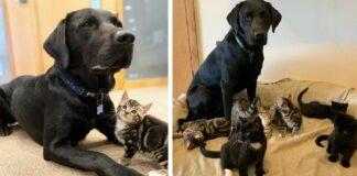 Šeimininkas parnešė namo 7 naujus šeimos narius: šuo susitiko su kačiukais ir nutiko kažkas stebuklingo
