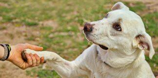 Jei šuo duoda jums leteną, tai gali reikšti šiuos 6 dalykus