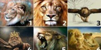 Testas: koks partneris jums tiktų labiausiai? Tereikia pasirinkti liūtą