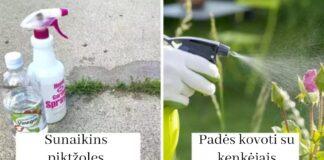 Neišeikite iš namų be acto. 7 būdai, kaip jį panaudoti sode