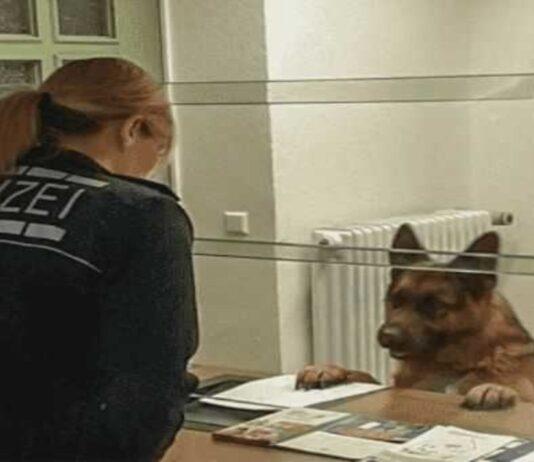 Policijos komisariate pasirodė šuo. Jis atėjo pranešti, kad pasimetė nuo šeimininko