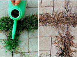 Daugiau jokių piktžolių ant takelio: pigus metodas, kuris padeda kartą ir visiems laikams