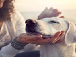 Kodėl šuo naudingas namuose: faktai ir prietarai