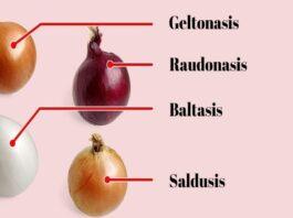 Skirtingos svogūnų rūšys: kokiems patiekalams jos tinka?