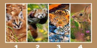 Pasirinkite gyvūną ir sužinokite, kokia charakterio stiprybe pasižymite!