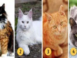 Pasirinkite katę ir atraskite savo stipriąsias puses